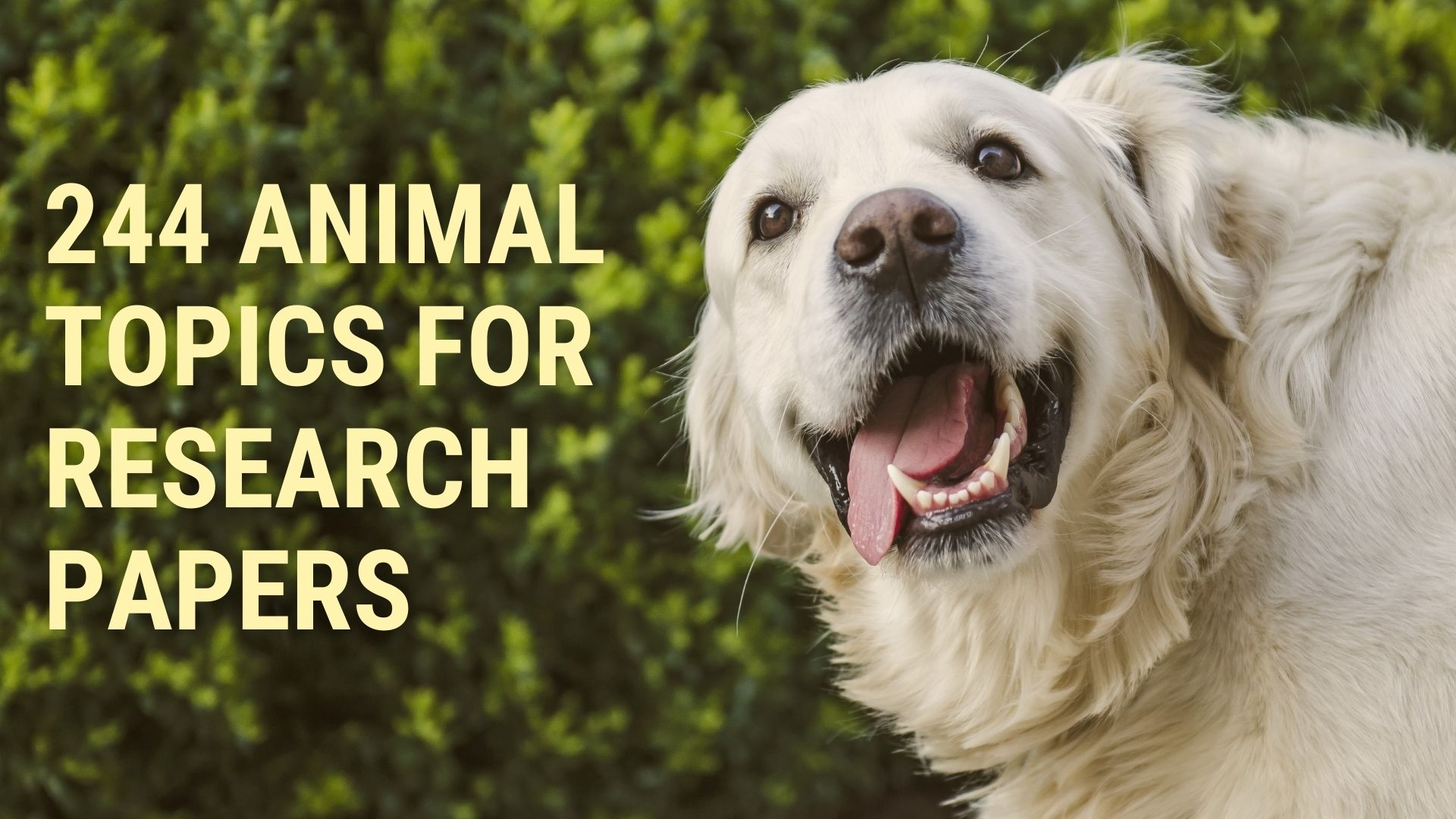 244 Awesome Animal Topics for Research Papers